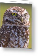 Burrowing Owl 001 Greeting Card