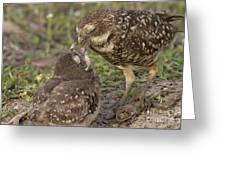Burrowing Owl Feeding It's Chick Photo Greeting Card