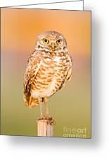 Burrowing Owl II Greeting Card