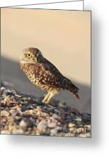 Burrowing Owl II Greeting Card