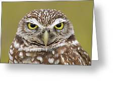 Burrowing Owl, Kaninchenkauz Greeting Card