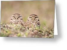 Burrowing Owl Pair Greeting Card