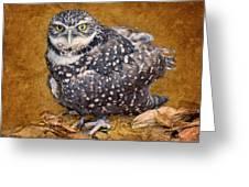 Burrowing Owl Portrait Greeting Card
