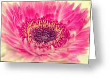 Burst Of Beauty Dahlia  Greeting Card