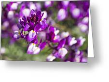 Burst Of Blossoms Greeting Card