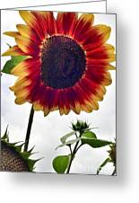 Burst Of Sunflower Greeting Card