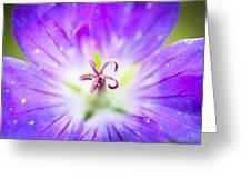 Burst Greeting Card
