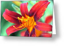 Burst Yellow Greeting Card