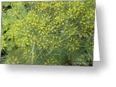 Bursting Dill Plant Greeting Card