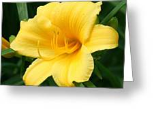 Bursting Lily  Greeting Card