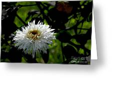 Bursting With Beauty Greeting Card