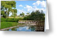 Busch Gardens Savannah Greeting Card