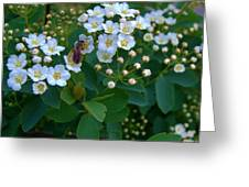 Bush Blossums With Bee Greeting Card