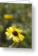 Bush Sunflower 1 Greeting Card