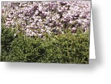 Bush With The Background In Cherry Klarenbeek Park In Arnhem Netherlands Greeting Card