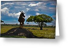 Bushbuck Guard Of The Mound   Greeting Card