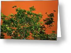 Bushfire Skies Greeting Card