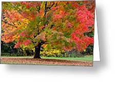 Busse Woods Fall Color Greeting Card