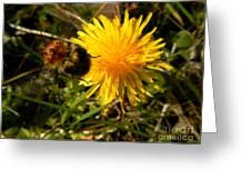 Bussy Bee And Dandelion Greeting Card
