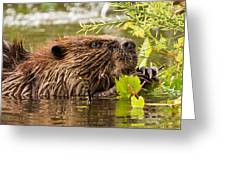 Busy As A Beaver Greeting Card