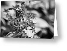Busy Bee - Bw Greeting Card