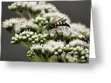 Busy Bee On White Greeting Card