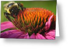 Busy Bumble Bee Greeting Card by Luke Moore