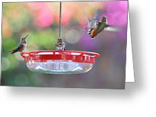 Busy Day At The Feeder Greeting Card