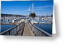 Busy Marina Greeting Card