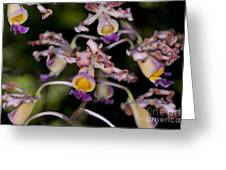 Busy Orchids Greeting Card