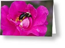 Busy Pink IIi Greeting Card