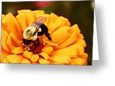Busybee Greeting Card