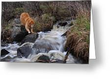 But Mom I Might Get My Feet Wet Greeting Card by Sandra Updyke