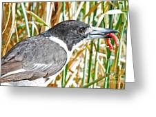 Butcherbird Greeting Card
