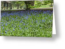 Bute Park Bluebells Greeting Card