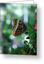Buterfly 4 Greeting Card