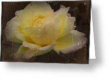 Butter Milk Rose Greeting Card