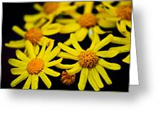Butter Weed Rain Greeting Card