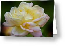 Buttercream Blush Greeting Card