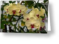 Buttercream Orchids Greeting Card