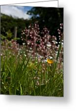 Buttercup And Wildflowers Greeting Card