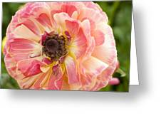 Buttercup Blossom Greeting Card