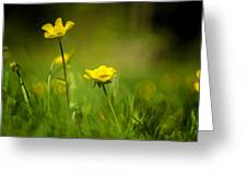 Buttercup Buttercup Greeting Card