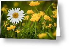 Buttercup Daisy Greeting Card