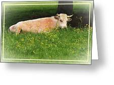 Buttercup Greeting Card by Joy Nichols