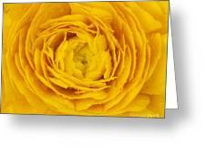 Buttercup Macro Greeting Card