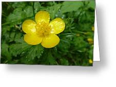 Buttercup Portrait Greeting Card