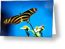 Butterflies And Blue Skies Greeting Card