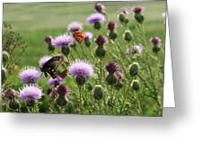 Butterflies And Bull Thistle Wildflowers Greeting Card