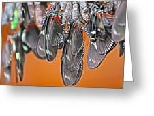 Butterflies And Cocoons Greeting Card